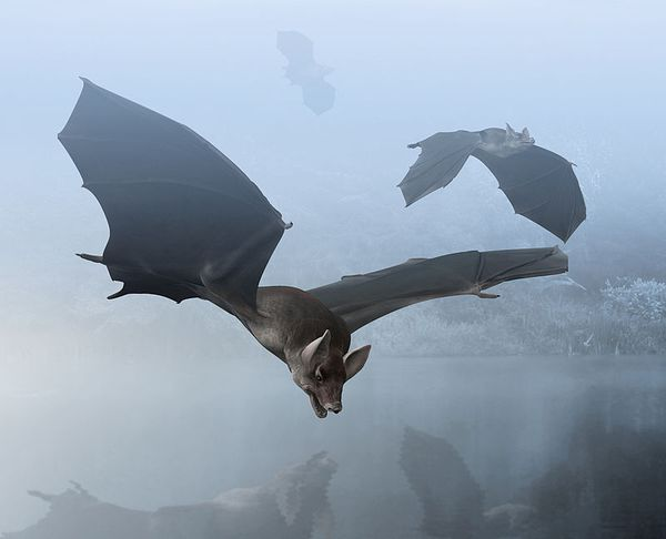 Palaeochiropteryx, an extinct genus of bat from the Middle Eocene of Europe