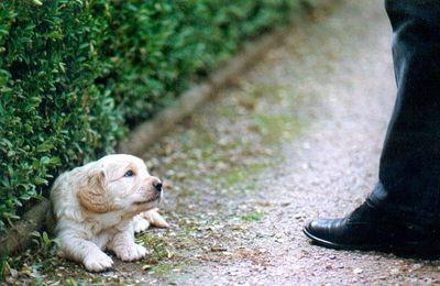 """""""Se former pour mieux se comprendre"""", suite de l'abécédaire du chien familier : le langage entre chiens"""