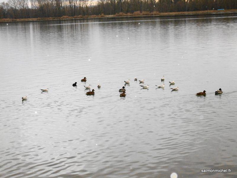 Décembre 2017 - Balade canal de Jonage