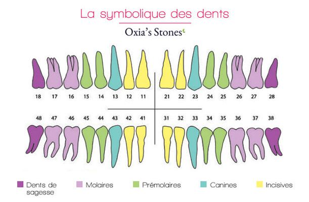 Dent 36 symbolique
