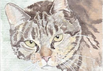 Aquarelles de chat suite