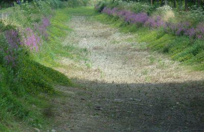 Au près d'Anet, le canal est toujours sans eau