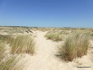 Accès aus plages océanes (la forêt de pins maritimes puis la dune et ses oyats)