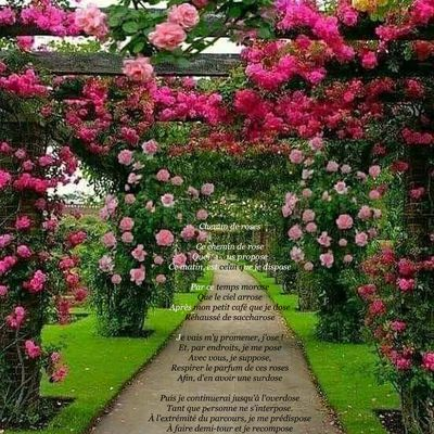Chemin de roses
