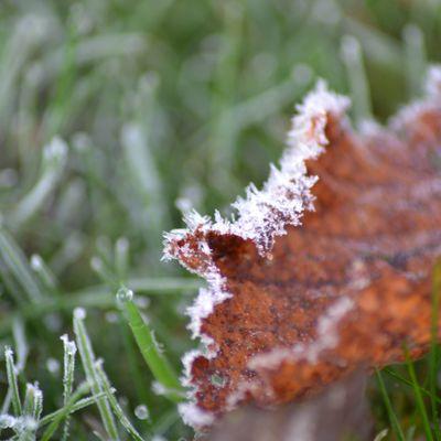 premiere gelée
