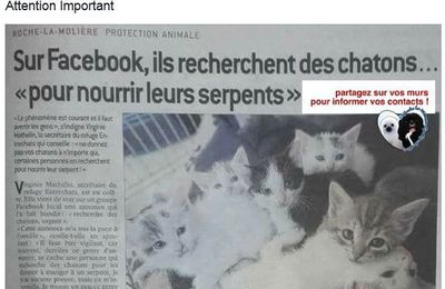 CHATONS POUR SERPENTS/NAC