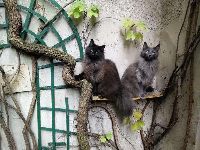 Joba et Juice qui sont parties ensemble et vivent avec un jeune couple à Paris