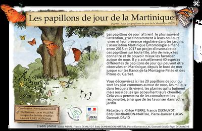Entrez dans le monde des papillons de la Martinique