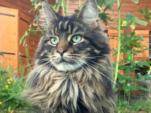 Mon chatchat d'amour, le plus beau de la terre et de l'univers