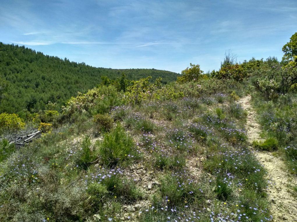 A la découverte des oiseaux dans le bois des Lens - Crespian le 22 mai
