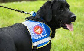 Tout savoir sur les chiens guides d'aveugles