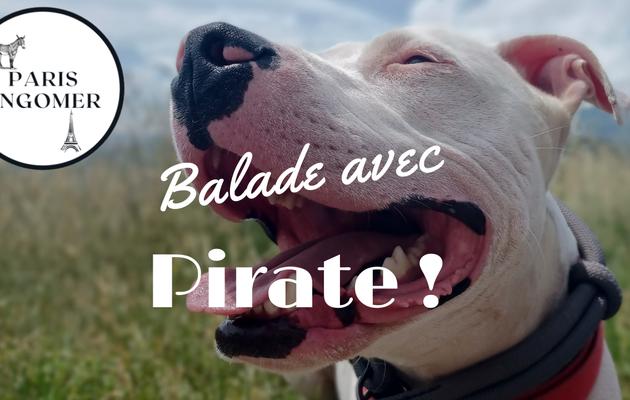 Balade matinale avec Pirate !