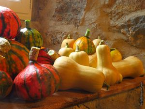 Courges, butternut et potimarrons