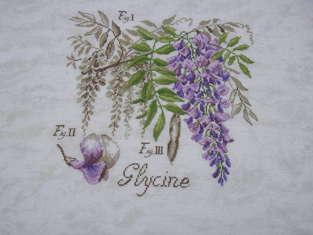 "Etude ""La Glycine"" de Véronique Enginger"