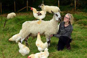 Journal du reconfinement/Acte 3 ''En Écosse, un hospice pour animaux''