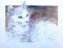 Le chat qui part vivre en Italie...