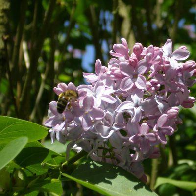 abeilles-de-lili.over-blog.com