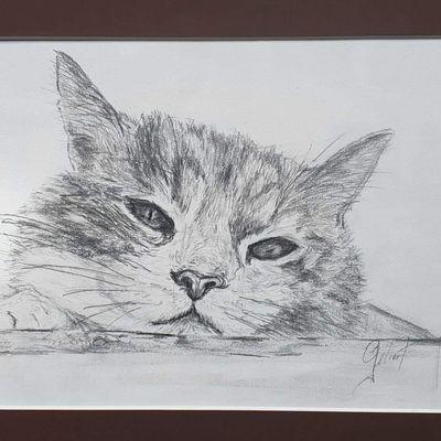 Franck Gélinet - Patoche le chat -
