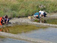 Visite du marais en photos