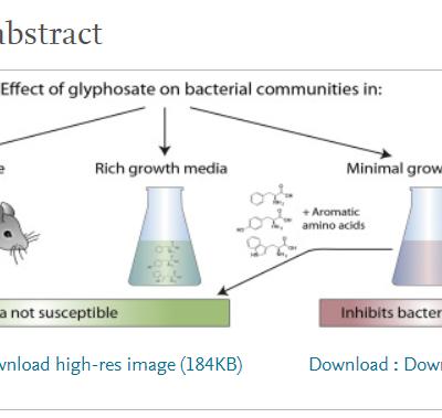 Le glyphosate a-t-il des effets sur le microbiote intestinal?