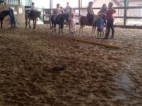 Stage initiation à l'équitation Comines 17-21/07/2017