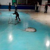 Japon: Un parc d'attractions qui proposait de patiner des poissons morts provoque des réactions glaciales