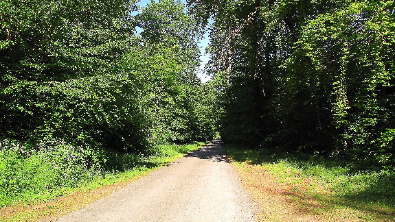 carrefour_Route du Vivier Corax_Route des Lorrains