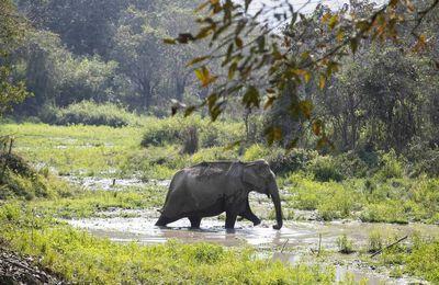 Cinq hommes interpellés, ils sont suspectés d'avoir décapité un éléphant de Sumatra