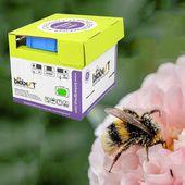 Ruche de Bourdons pollinisateurs 350 à 700 m2