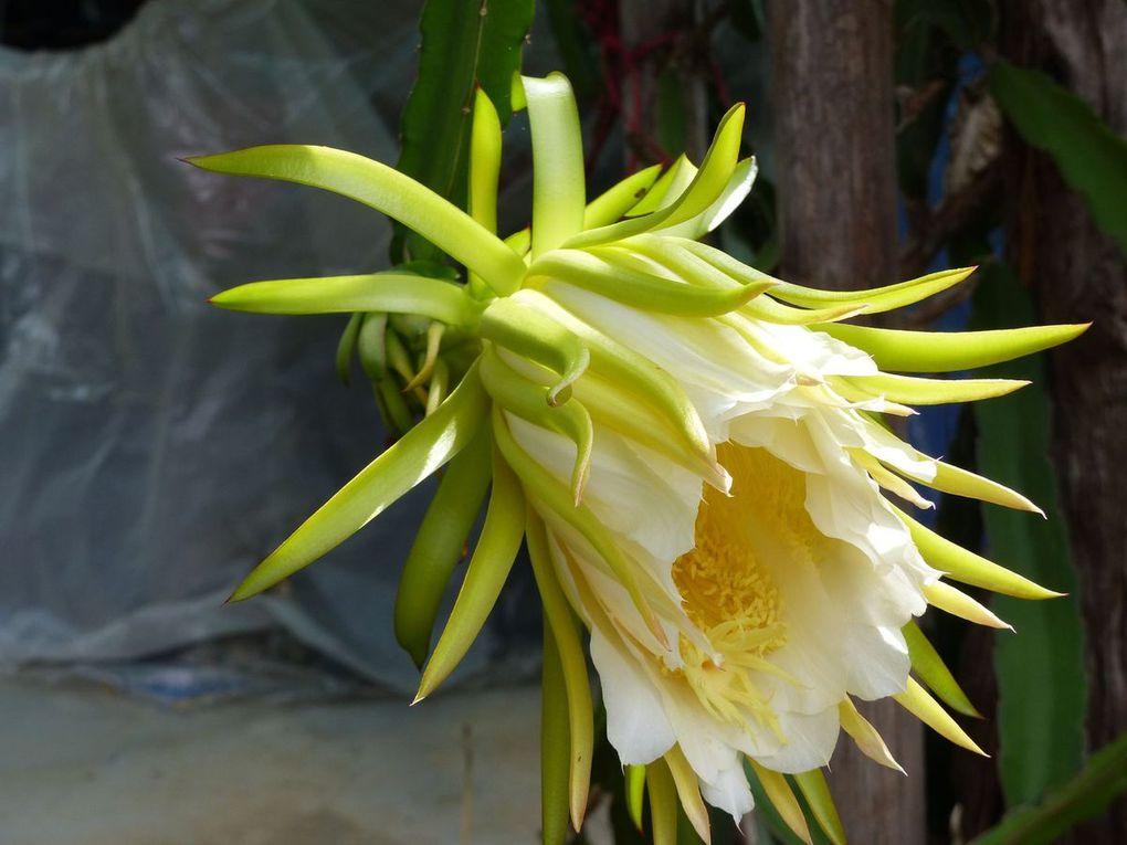 Fleur du jour (18-28)