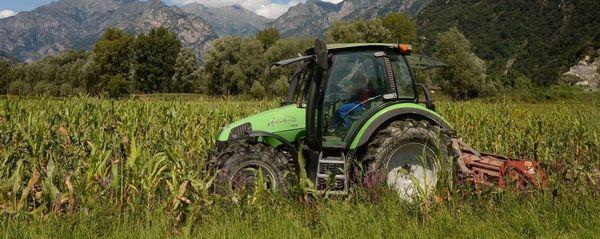 La Svizzera cerca contadini  Paga mensile tremila euro