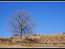 L'arbre dénudé et la rocaille ...