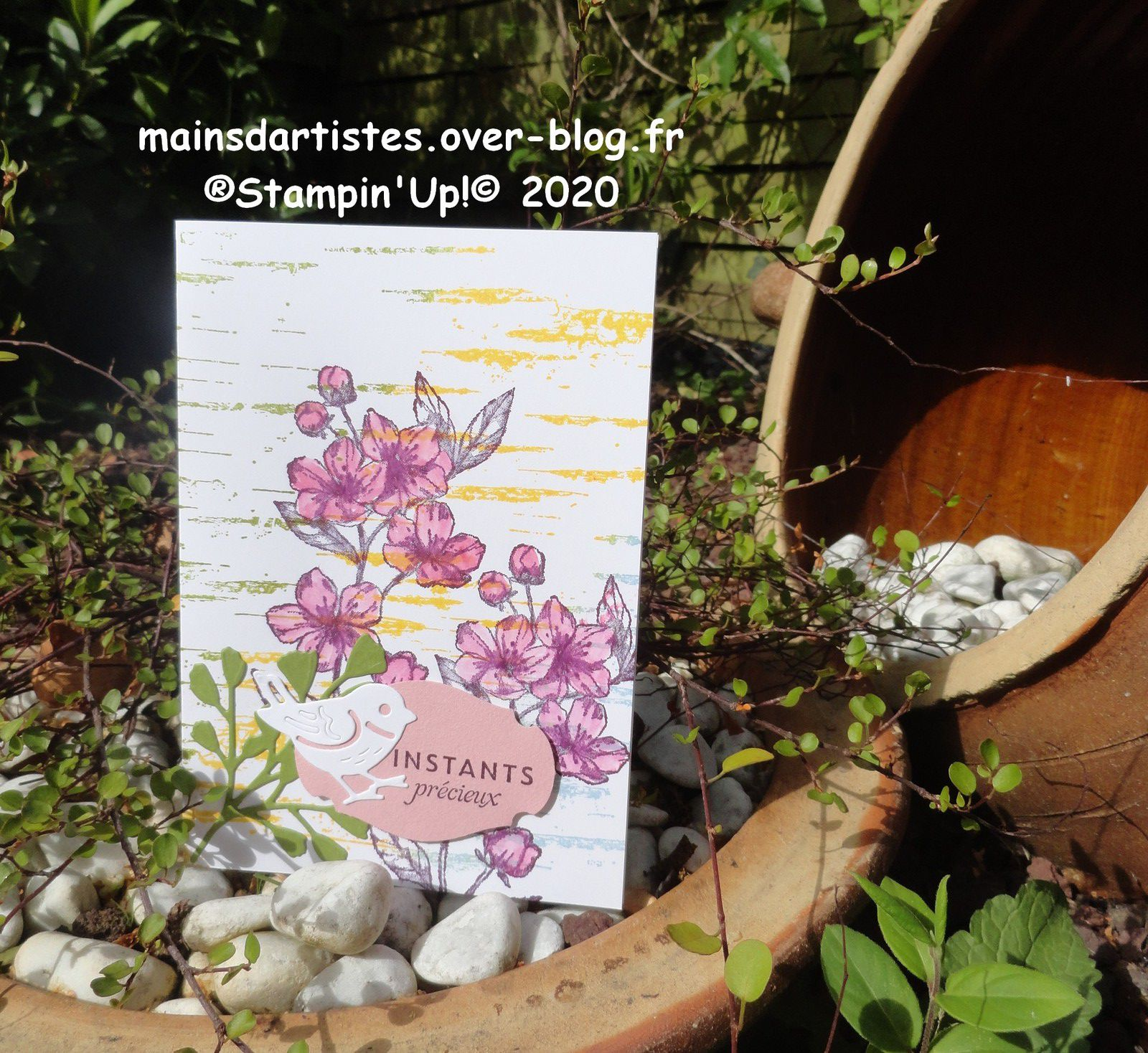 TAMPONS,FLEURS POUR TOUJOURS,STAMPIN'UP!