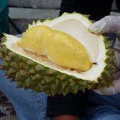 Durian, le Roi des fruits - Noy et Gilbert en Thaïlande