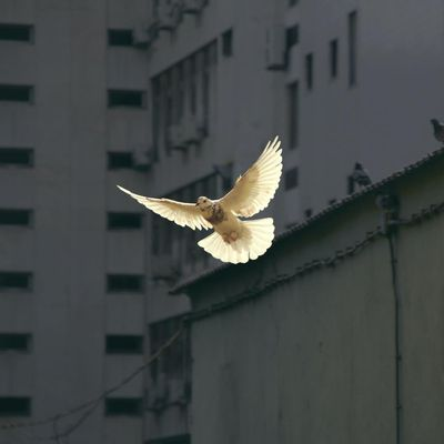 Who / what is the Holy Spirit?