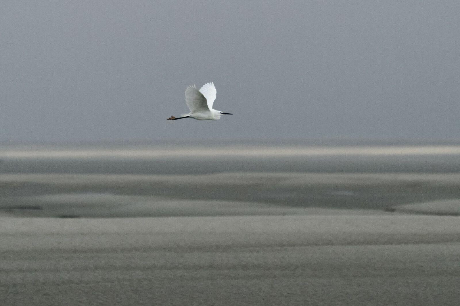 37 - Un aperçu de la Baie de Somme (80)