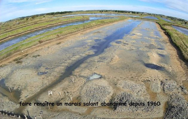 Renaissance du marais salant de Bois Grolant à l'Île d'Olonne
