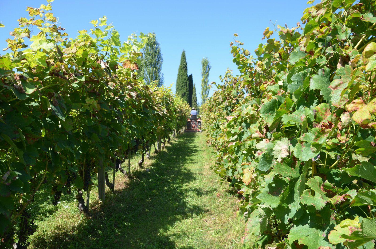 Domaine Les Cyprès - Vin  - Fruits & Légumes - provisions !