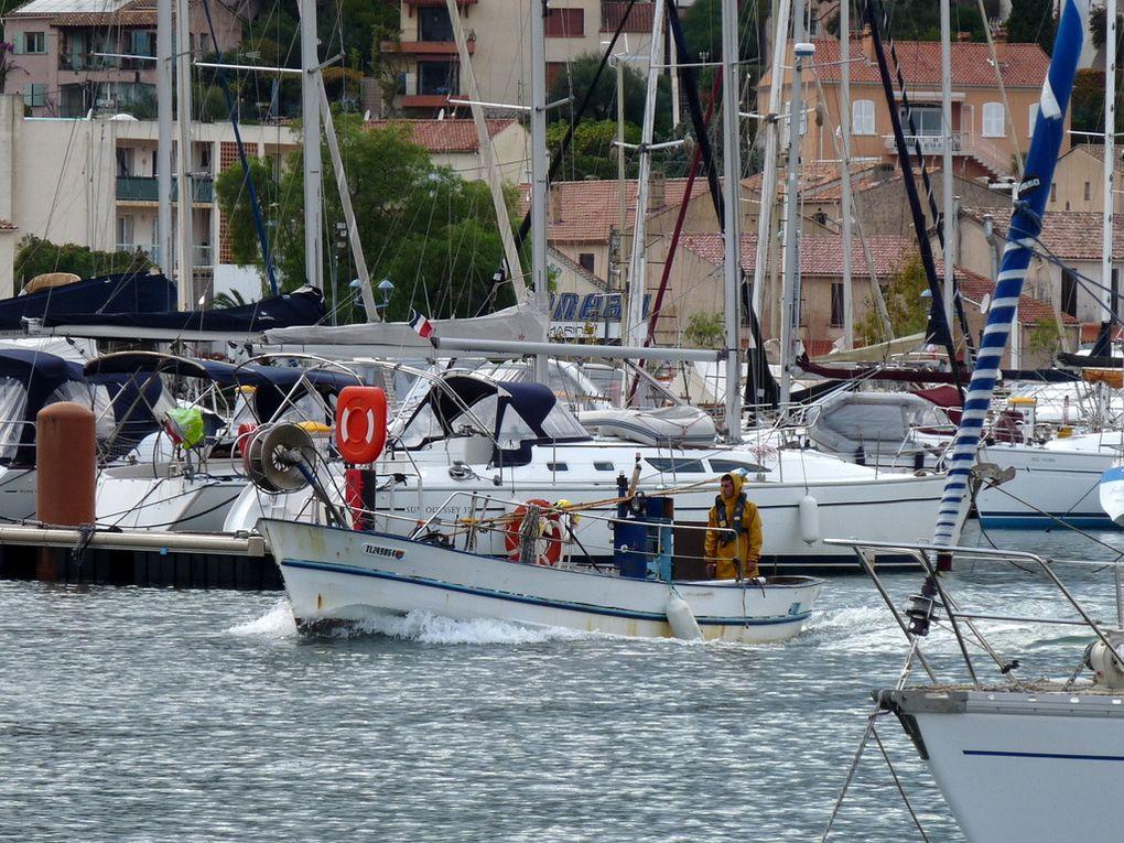 HERMINE , TL 249864 , dans le port de Saint Mandrier