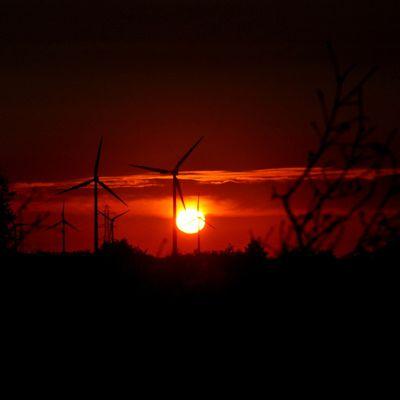 Soleil levant sur un champ d'éoliennes