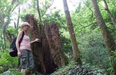 PARC DONGYANSHAN 東眼山森林遊樂區