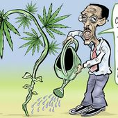 [Chronique] Le Rwanda mise sur le commerce du cannabis thérapeutique - Jeune Afrique