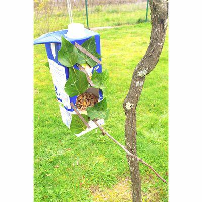 [Activité] Mangeoire à oiseaux à partir d'une brique de jus de fruit