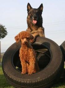Le chien et le pneu n°10