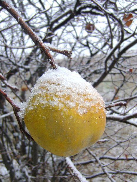 Il a neigé sur le village de Montner et voici 35 photos prises le jour du 26 décembre 2008 . Puis la rivière de glace du 7 au 10 janvier 2009 . Un hiver exceptionnel .