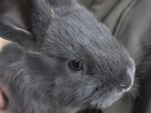 Les lapins des voisins