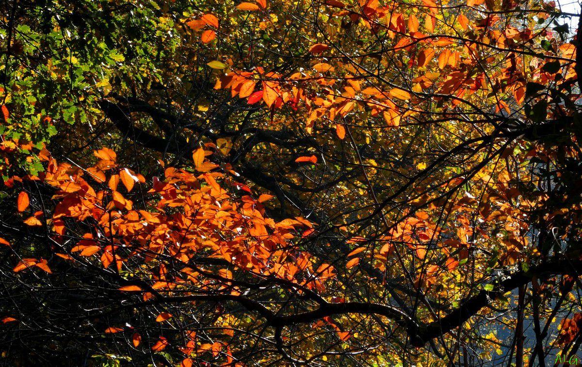 La Courbe : Fin d'automne reconfiné