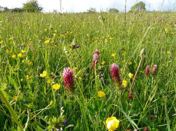 Fleurs sauvages trouvées au détour des chemins au mois de mai 2008