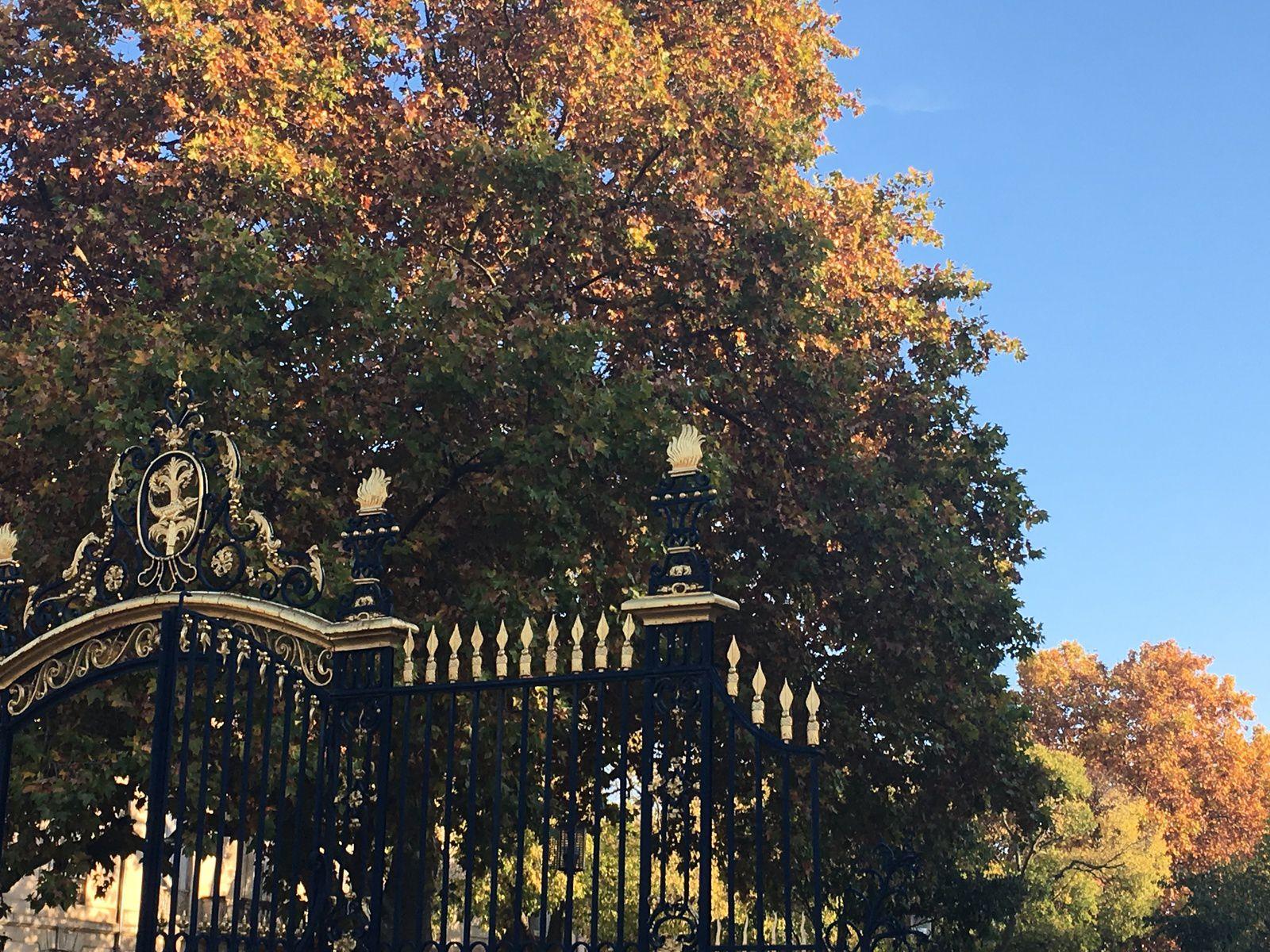 L'automne aux Jardins : des sous-bois aux teintes somptueuses...