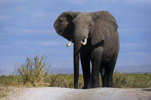 Un éléphant au milieu de la pièce